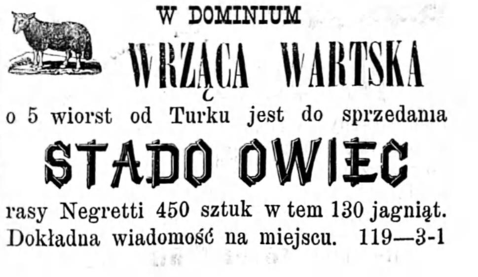 Reklama - sprzedaż owiec Gazeta Kaliska 1893